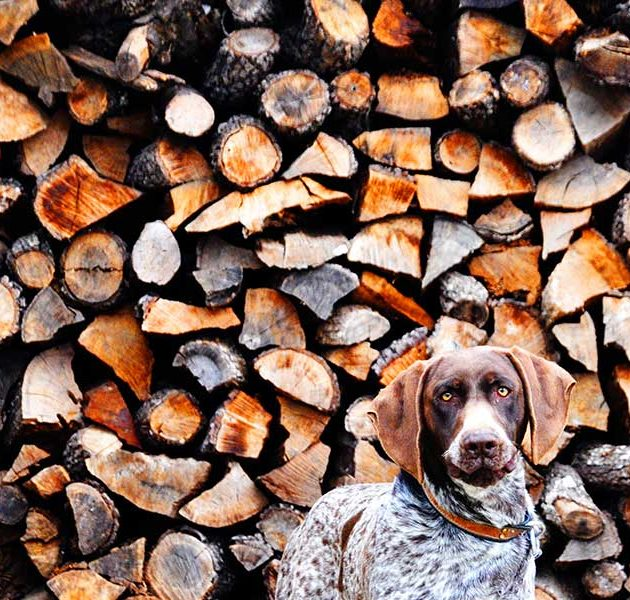 Billy-Couper---Dog-amongst-Logs