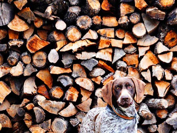 Billy-Couper---Dog-amongst-Logs