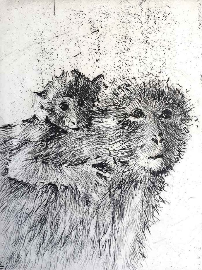 Michele-Stagnetto-Etching-Barbary-Apes