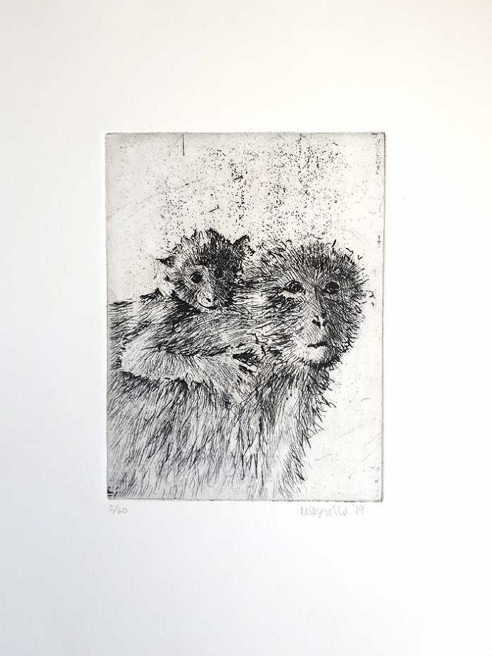 Michele-Stagnetto-Etching-Barbary-Apes-mount