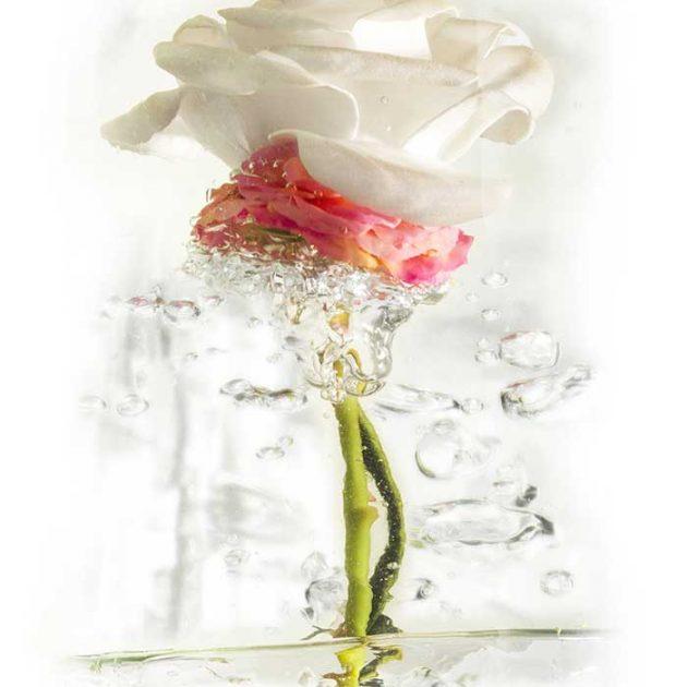 geraldine-martinez-flower-series-COMBO