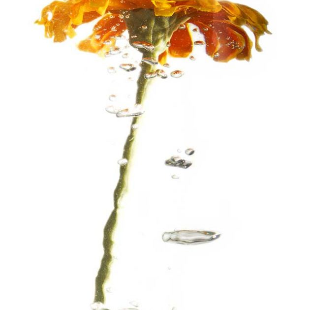 geraldine-martinez-flower-series-ORANGE