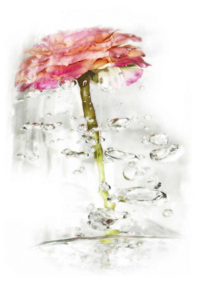 geraldine-martinez-flower-series-PINK
