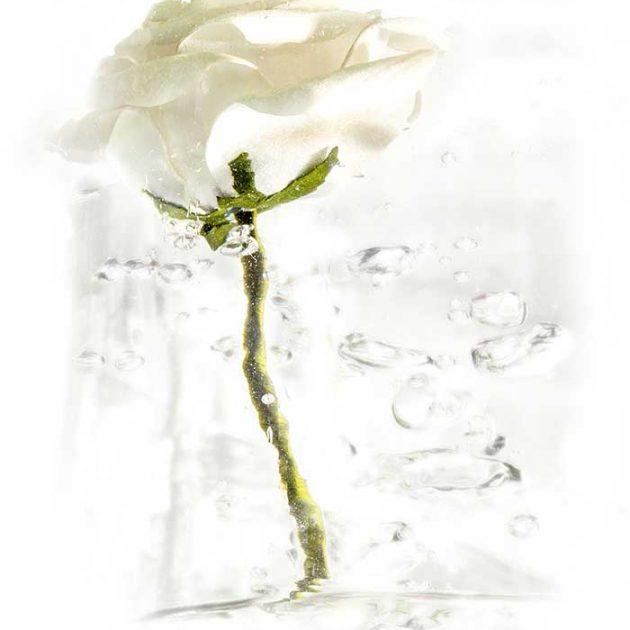 geraldine-martinez-flower-series-WHITEv1
