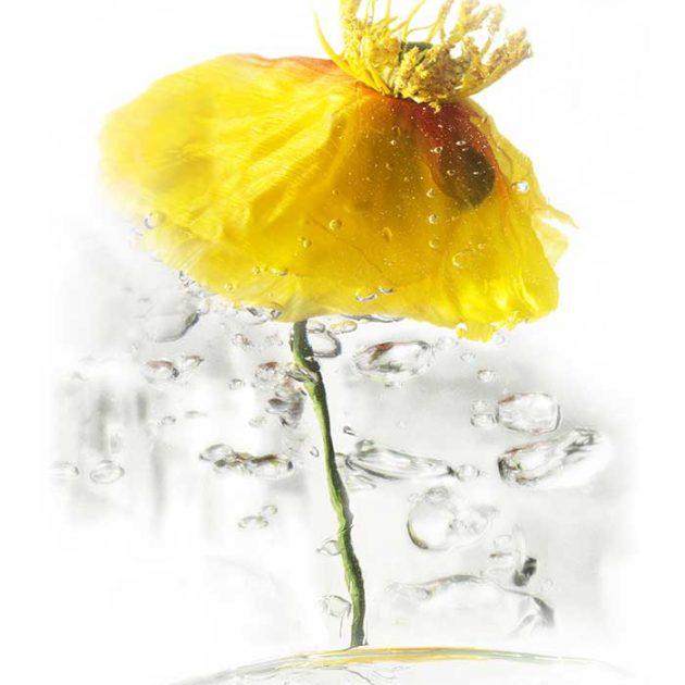 geraldine-martinez-flower-series-YELLOW