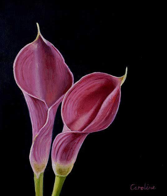 caroline-canessa-pink-calla-lillies